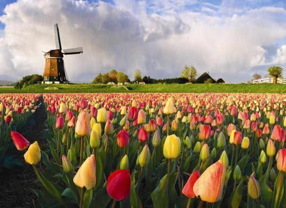 Netherlands of 7685 Frames