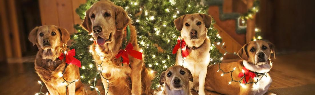 Коледа и Нова Година 2017