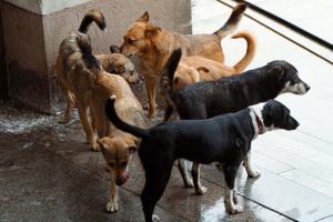 кучетата