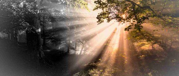 Триумфалното завръщане на чудесата